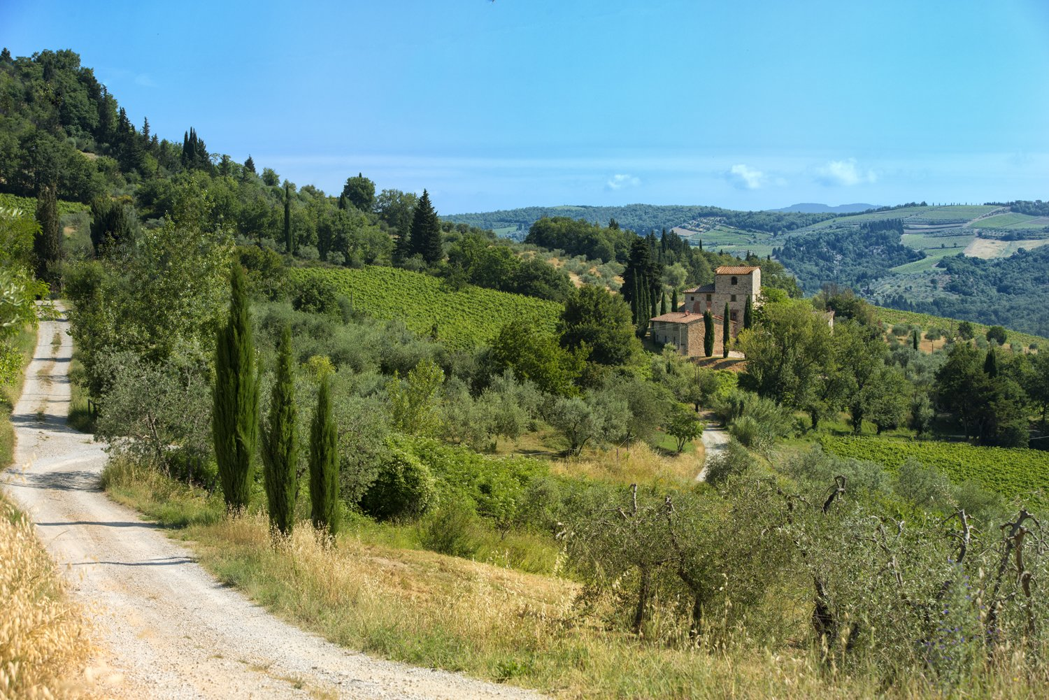 The property comes with six acres planted with cypress and olive trees.