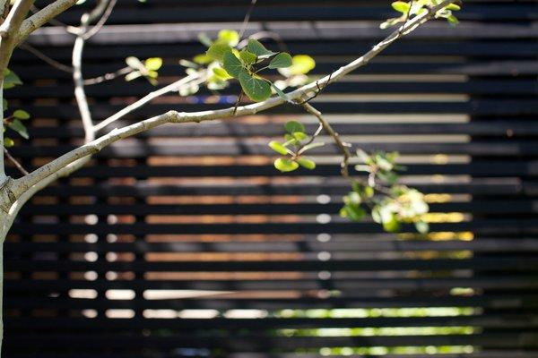 Photo 11 of Trotman Residence modern home