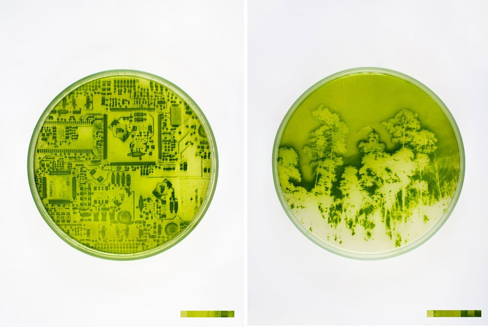 "Lia Giraud's Landscape Photos ""Grown"" On Light-Sensitive Algae  A project nick named ""Algae-graphy.""  Material Spotlight: Algae by Melissa Abel"