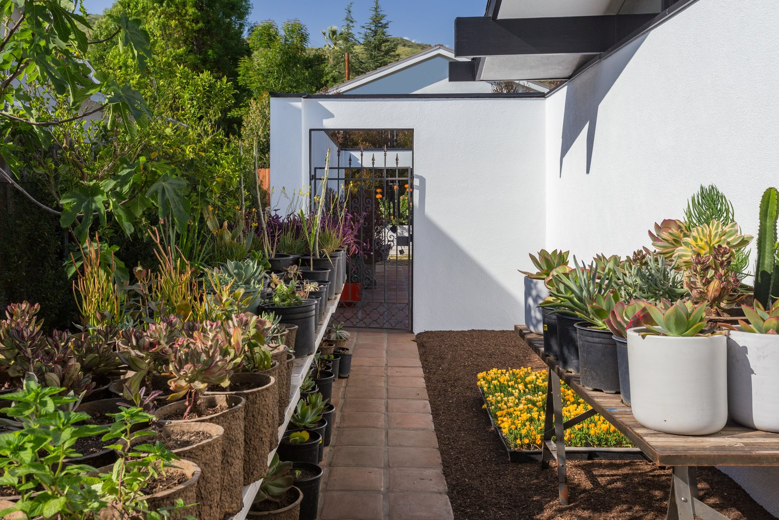 Tagged: Outdoor, Side Yard, and Gardens.  Photo 13 of 14 in Offered at $899K, a Restored Midcentury Abode Shines in Southern California