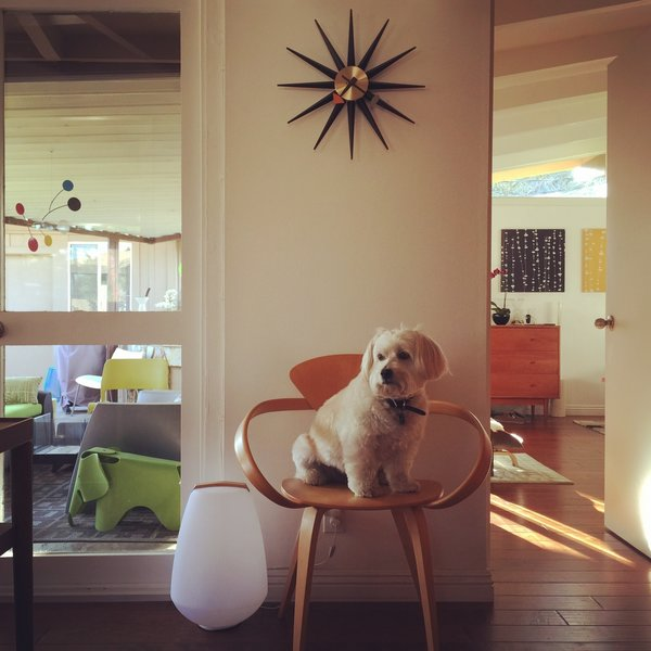 Modern home with living room. Reilly, the family dog, enjoys lounging atop the Cherner armchair. Photo 8 of Kallin Rancho