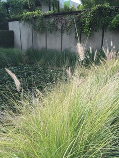 Native plants adorn the poured concrete walls and roofline of the Schindler House.