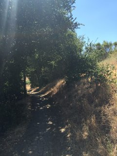 Arastradero Preserve - Photo 5 of 6 - Relief from the summer sun under this natural canopy.