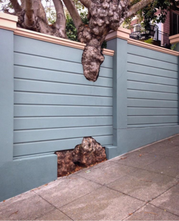 15 Brilliant Designs That Work Around Nature - Photo 4 of 15 - Far Out Flora captures this thoughtful fence design she discovered in San Francisco's Marina District.