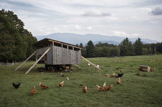 Summer Graze - Photo 1 of 7 - Von Trapp resort and farm in Vermont.