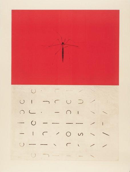 Hawk Alphabet by Marcia Weese