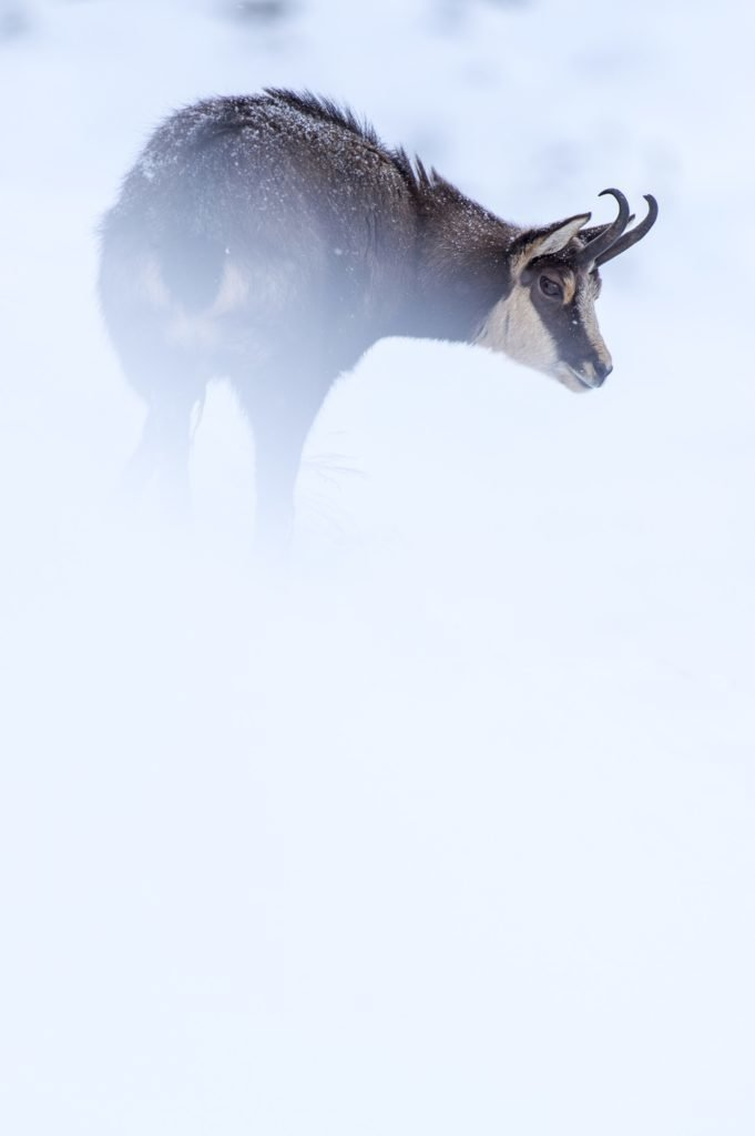 #alpinemodern #wildpresence #italianalps Photo by Martin Dellicour
