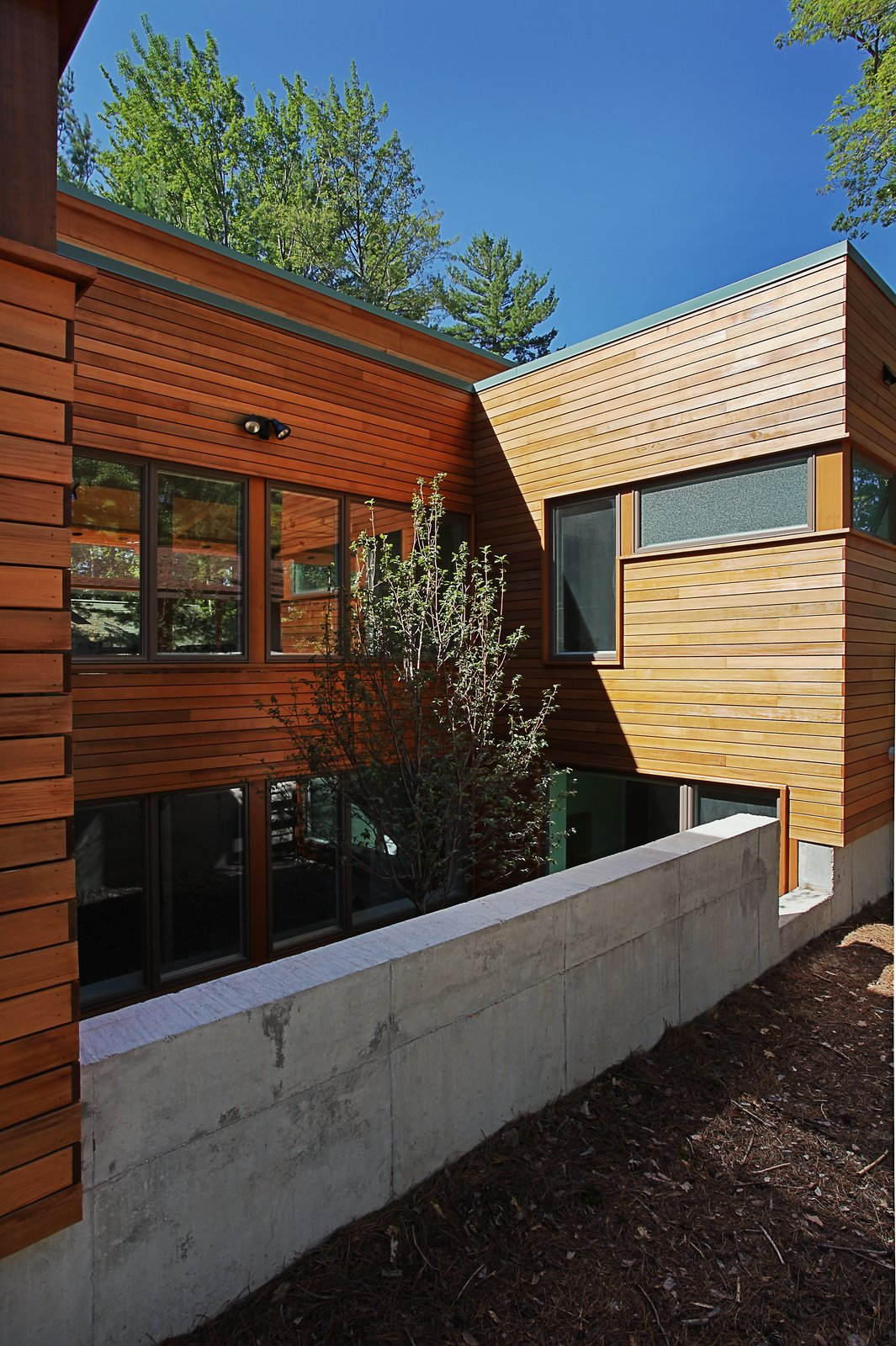 Rear courtyard with tree and basement bedroom windows