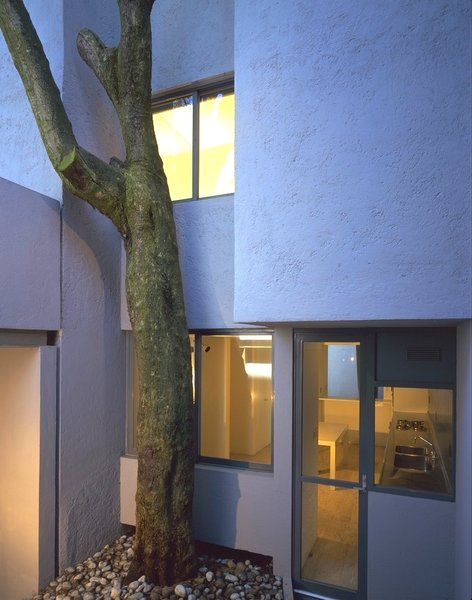 Salvaged tree at kitchen entry Photo 13 of Casa Lila modern home