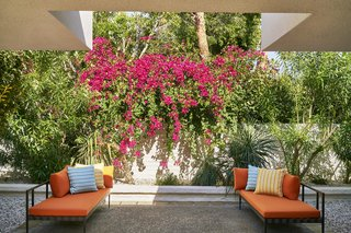 Jonathan Adler Reveals His Redesign of the Parker Palm Springs - Photo 6 of 6 - Lush, tropical landscapes designed by Judy Kameon blanket the exterior of the hotel.