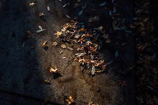 A narrow beam of light hits some dead leaves on the pavement.