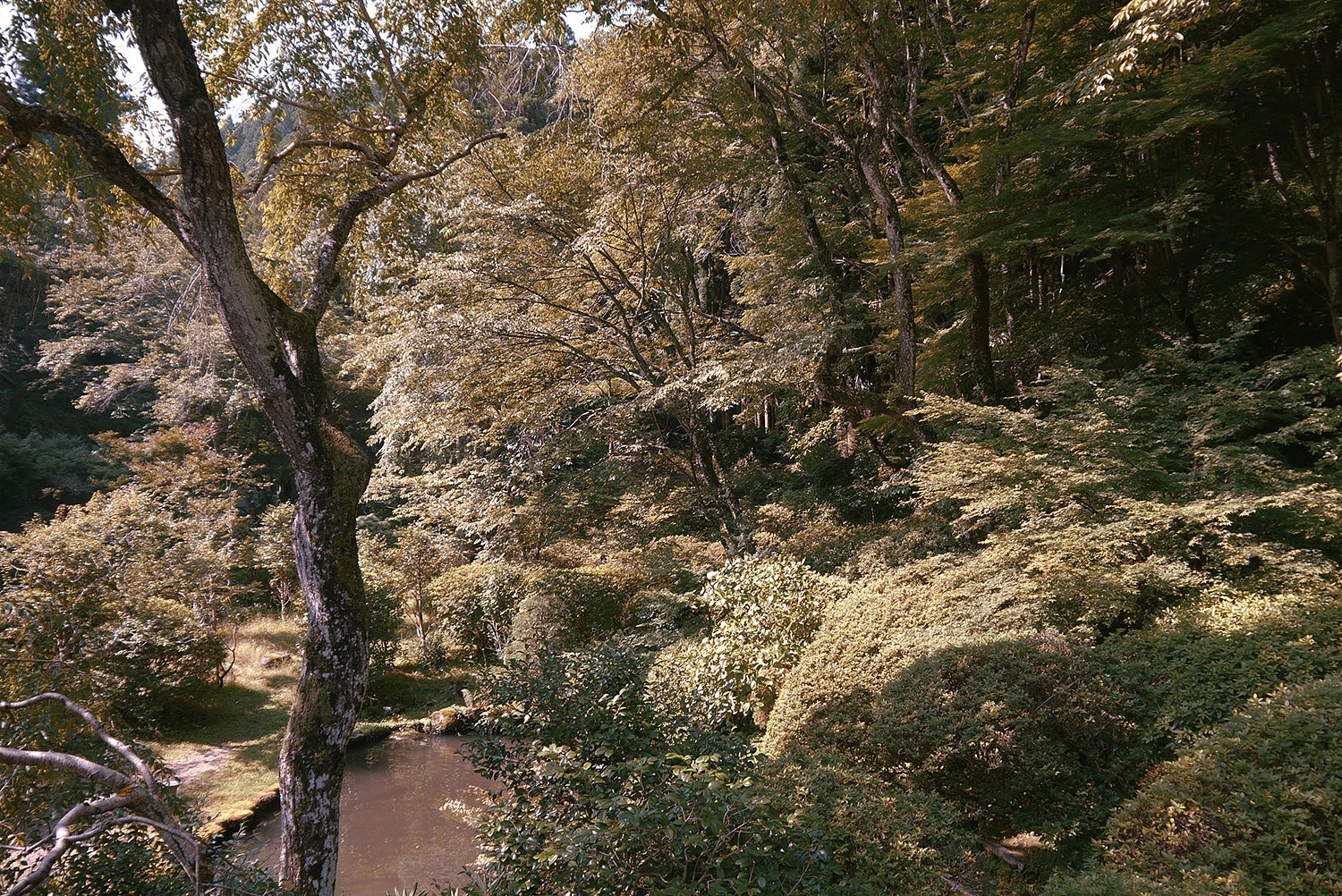 A scenic view of the wild, natural landscape in Yoshino, a city in the Nara region of Central Japan. Tagged: Outdoor and Trees.  Photo 12 of 12 in The Community-Run Cedar House by Airbnb and Go Hasegawa Welcomes Guests in Rural Japan from Yoshino Cedar House