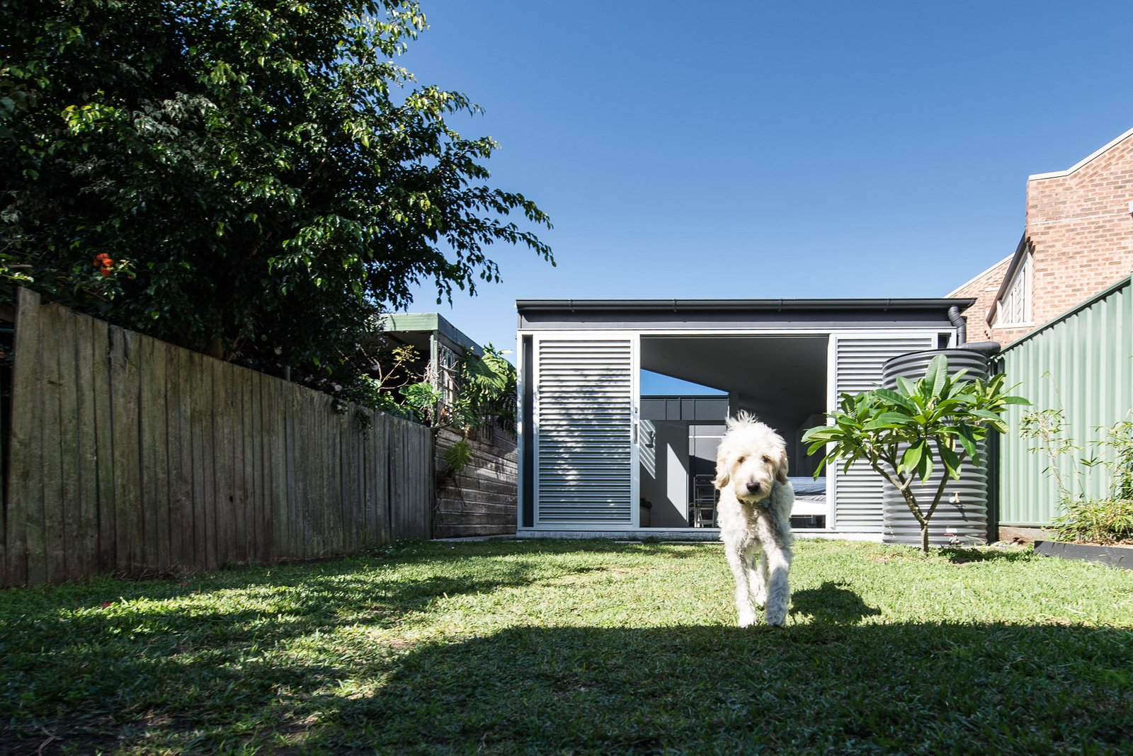 rear yard  Cooks Hill Granny by Shane Blue