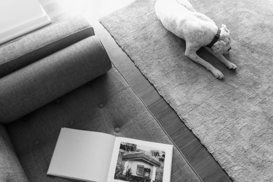 Dogs on Dwell:  My Modern Boxer Tofu by Nikki Janda