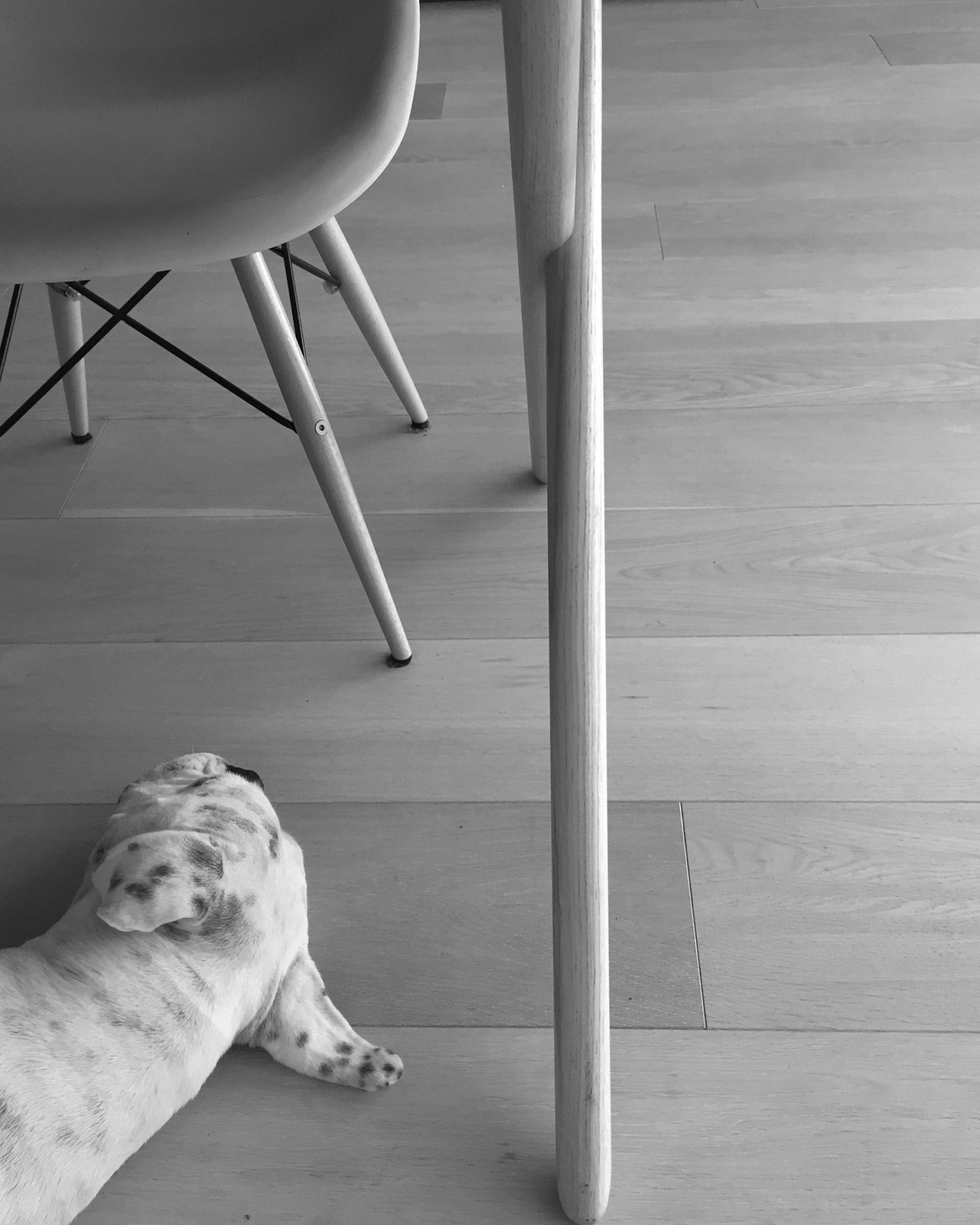 Comfort in #Eames  Dogs on Dwell:  My Modern Boxer Tofu by Nikki Janda