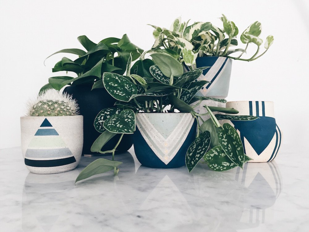 Photo 2 of 5 in Put a Plant on It | Clean Air, Easy Care: Pretty, Tough Houseplants that Purify