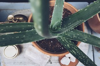 Put A Plant On It | Aloe Edition - Photo 3 of 5 -