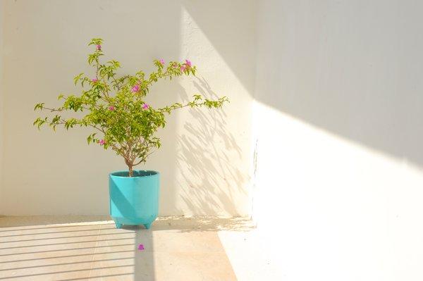 Photo 9 of Playa 55 modern home