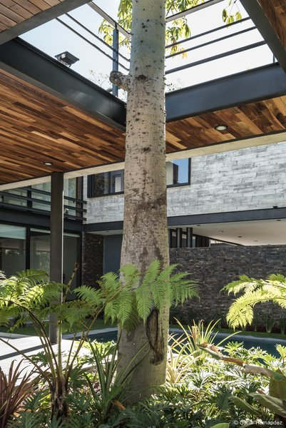 The tree Photo 19 of Casa Kalyvas modern home