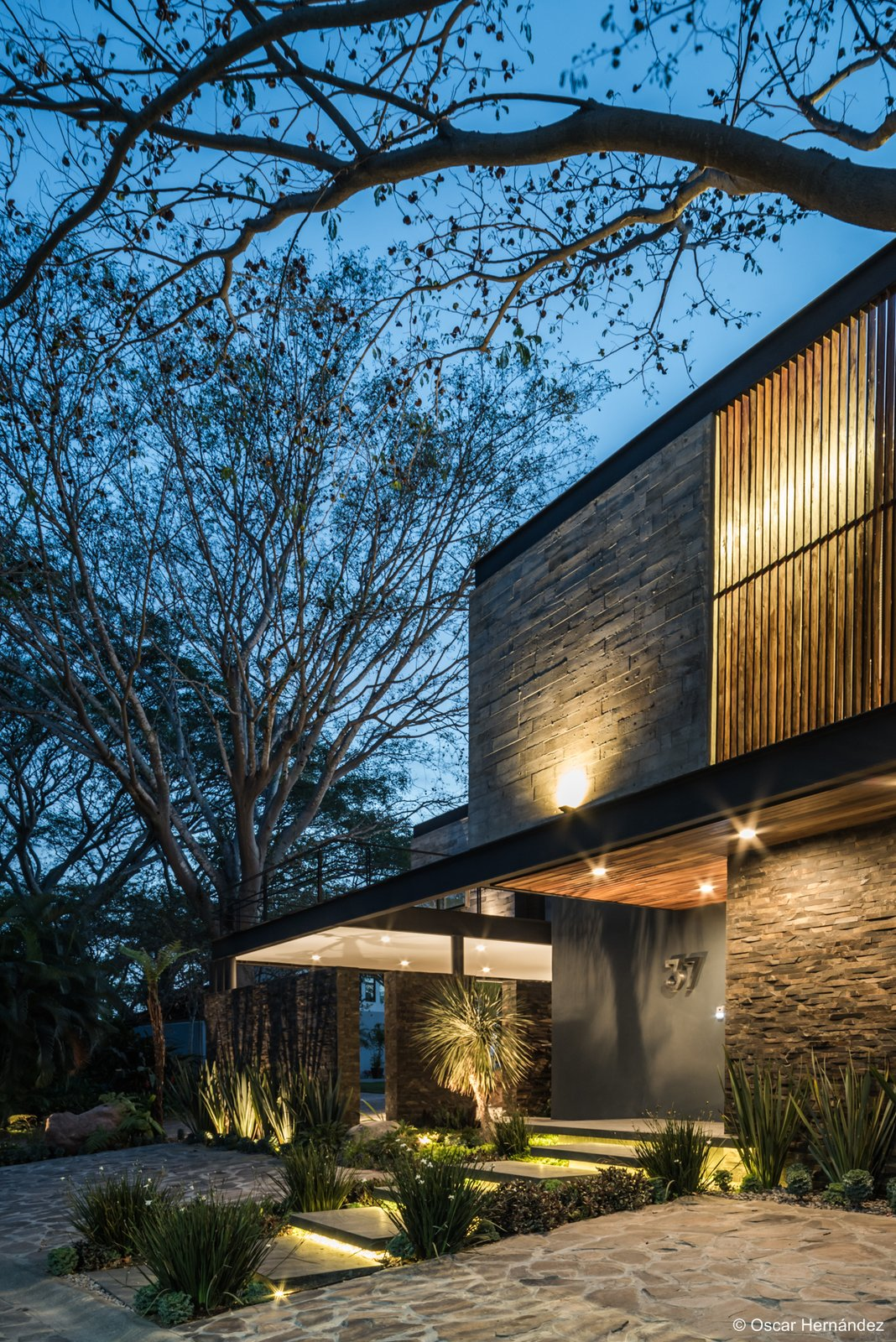 Tree siluets  Casa Kalyvas by Taller de Arquitectura