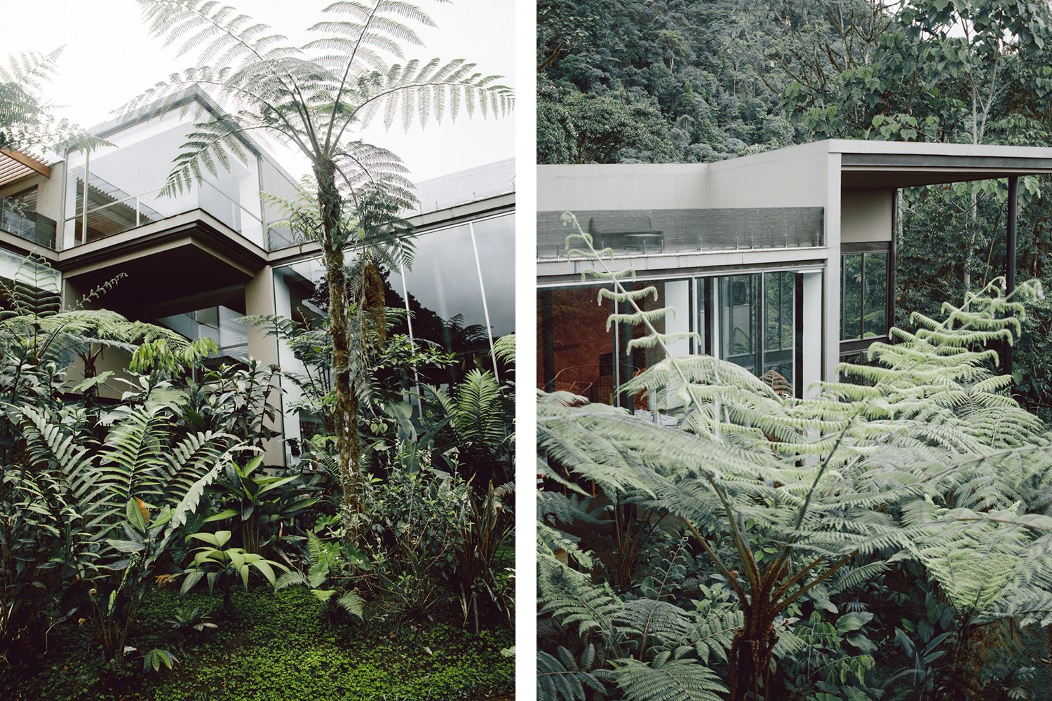 Photo 7 of 11 in Within Ecuador's Most Beloved Cloud Forest, A Luxury Lodge