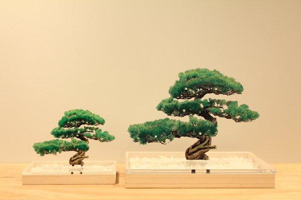 Acrylic Bonsai