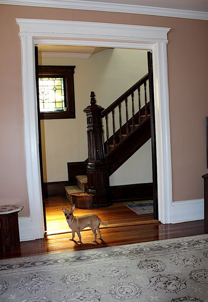 The staircase through the French doors. Alvin is a rescue. Photo 9 of Das Backsteinhaus modern home