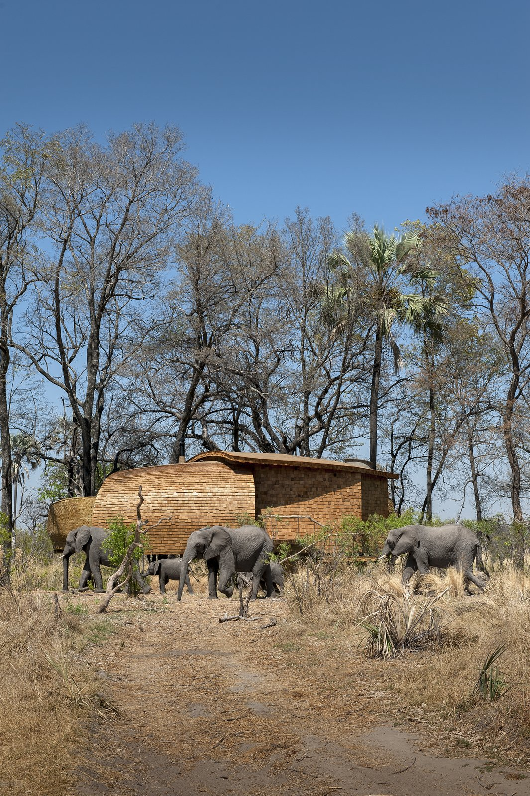 Photo 2 of 13 in Eco-Friendly Safari Lodge in Africa's Okavango Delta