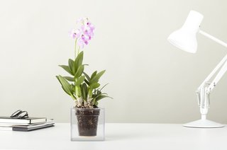 12 Modern Ways to Decorate With Flowers - Photo 4 of 7 - If you have kids and don't want to risk glass breakage, then the Bosske cube, designed by Patrick Morris and made out of clear acrylic, is a great alternative to a glass vase. The planter reveals the inner workings of your live plants as they grow—roots, soil, and all.