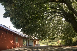 A Bright Red Island Residence Embraces a Linden Tree - Photo 3 of 13 - A large linden tree in the courtyard