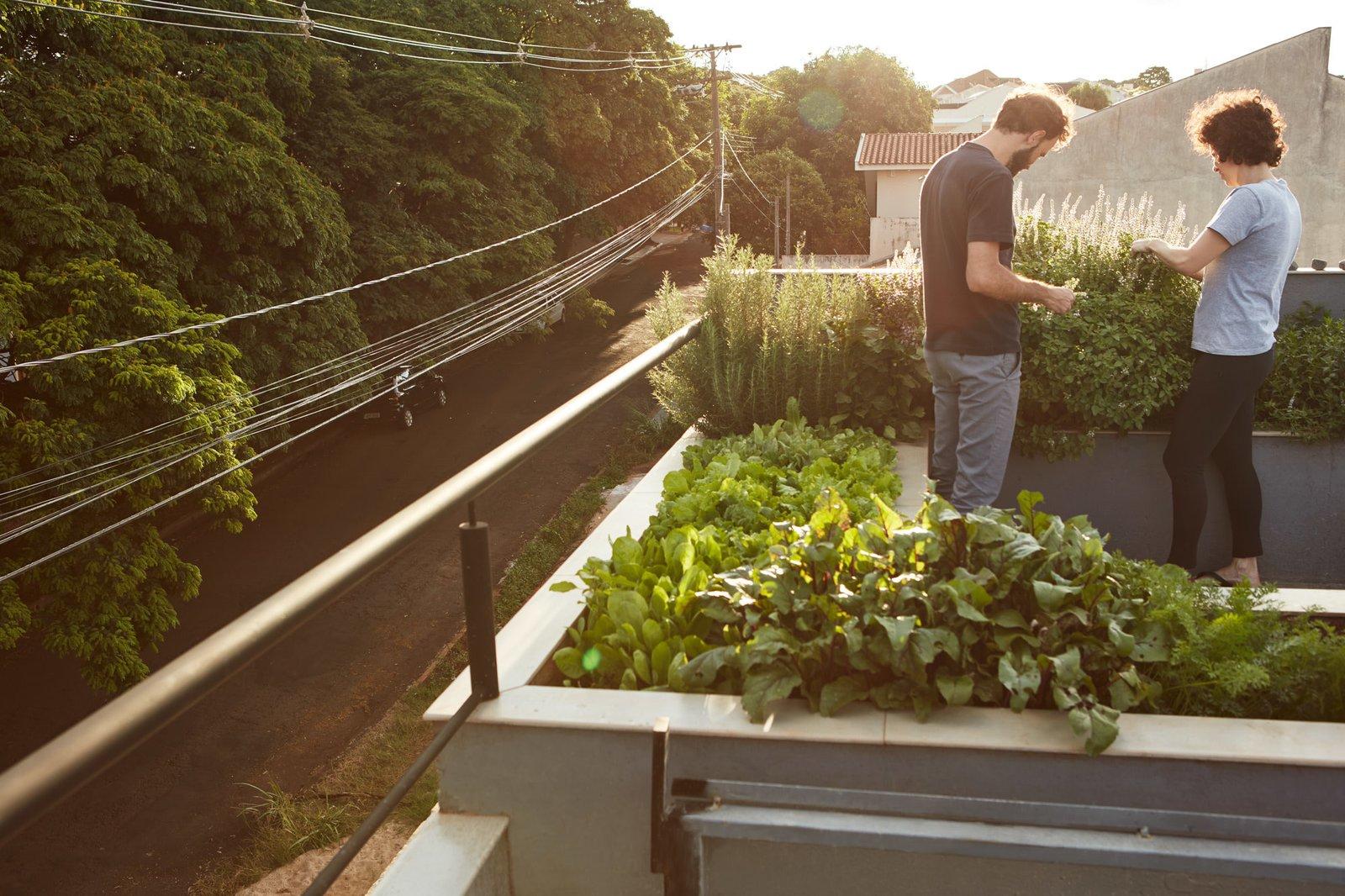 An organic rooftop garden.
