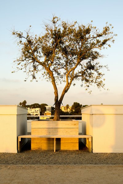 A 100-year-old olive tree to brought up to the roof garden with a crane.