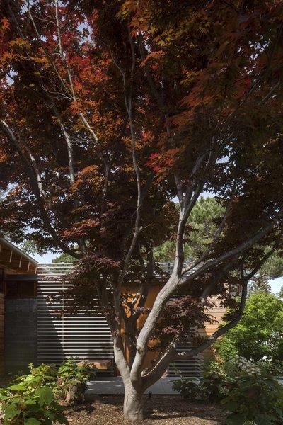 Photo 5 of Los Altos Modern Residence modern home