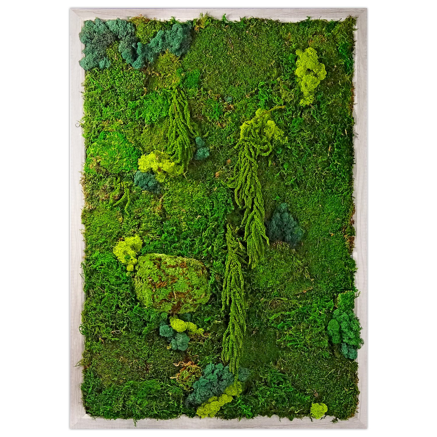 Preserved Moss Living Wall Garden - Photo 1 of 1