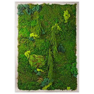 Preserved Moss Living Wall Garden