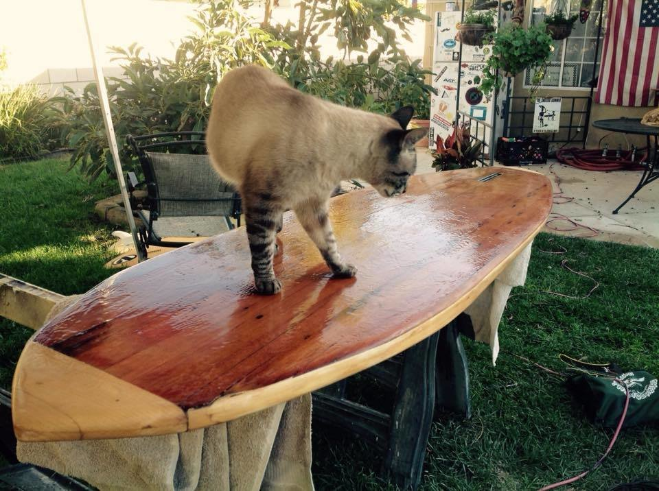 Leo inspects my handywork. As you can see, the glassing is rough; many hours of sanding are now required, but I was very eager to baptise  Photo 20 of 26 in Crafting a Hollow Wood Surfboard from Old-Growth Redwood