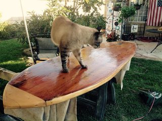 """Leo inspects my handiwork. As you can see, the glassing is rough; many hours of sanding are now required but I was very eager to baptize """"my baby""""."""