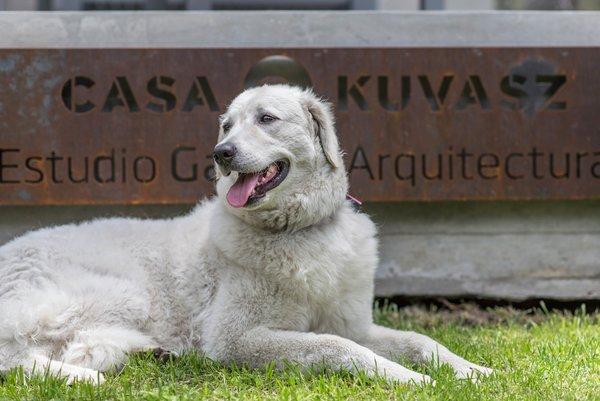 © Diego Medina Photo 13 of Casa Kuvasz modern home