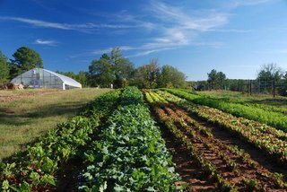 An Eco-Friendly Community Outside of Atlanta Celebrates Nature and Sustainability - Photo 10 of 10 - The local farmland provides food for weekly farmer's markets and restaurants in the community.