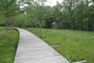 An Eco-Friendly Community Outside of Atlanta Celebrates Nature and Sustainability - Photo 9 of 10 - A wastewater area doubles as a nature trail along a raised boardwalk.