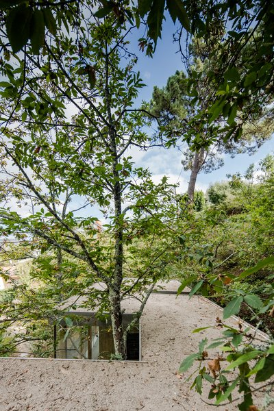 The home is designed to maneuver around existing trees.