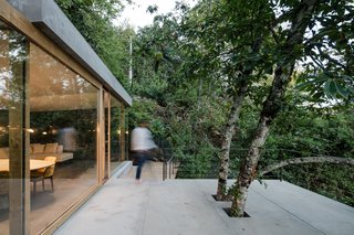 A Portuguese Glass House Uses Surrounding Foliage as a Privacy Screen - Photo 12 of 15 - Existing trees poke through the large patio.