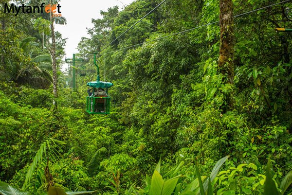 costa rica rainforest Photo  of 5 Things You Must Remember While Exploring Costa Rica's Rainforests modern home