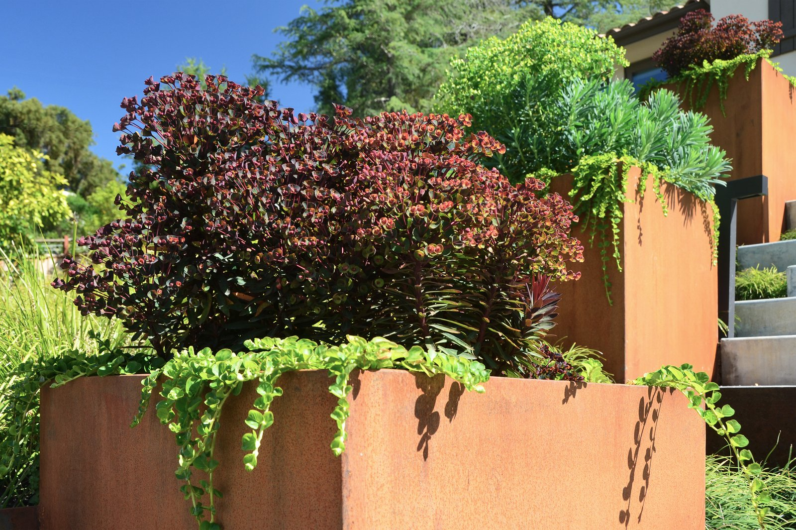 Corten Planter Detail  Los Altos Hills Landscape by Greenblott Design