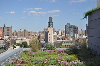 A Brooklyn-Based Landscape Firm That's Reshaping New York City's Green Urban Scene - Photo 7 of 13 -