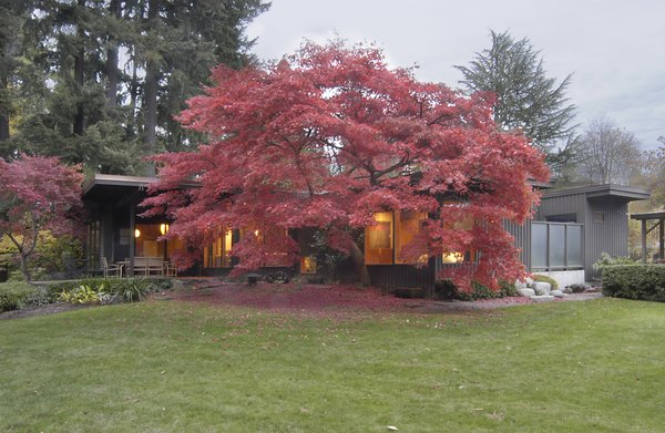 The new wing blends seamlessly with the original 1949 home, as it wraps around a majestic Japanese maple tree. The home, a prime example of Northwest Midcentury Modern architecture, adopts a muted color palette allowing it to coalesce with its natural surroundings.    Photo 9 of Belluschi Addition modern home