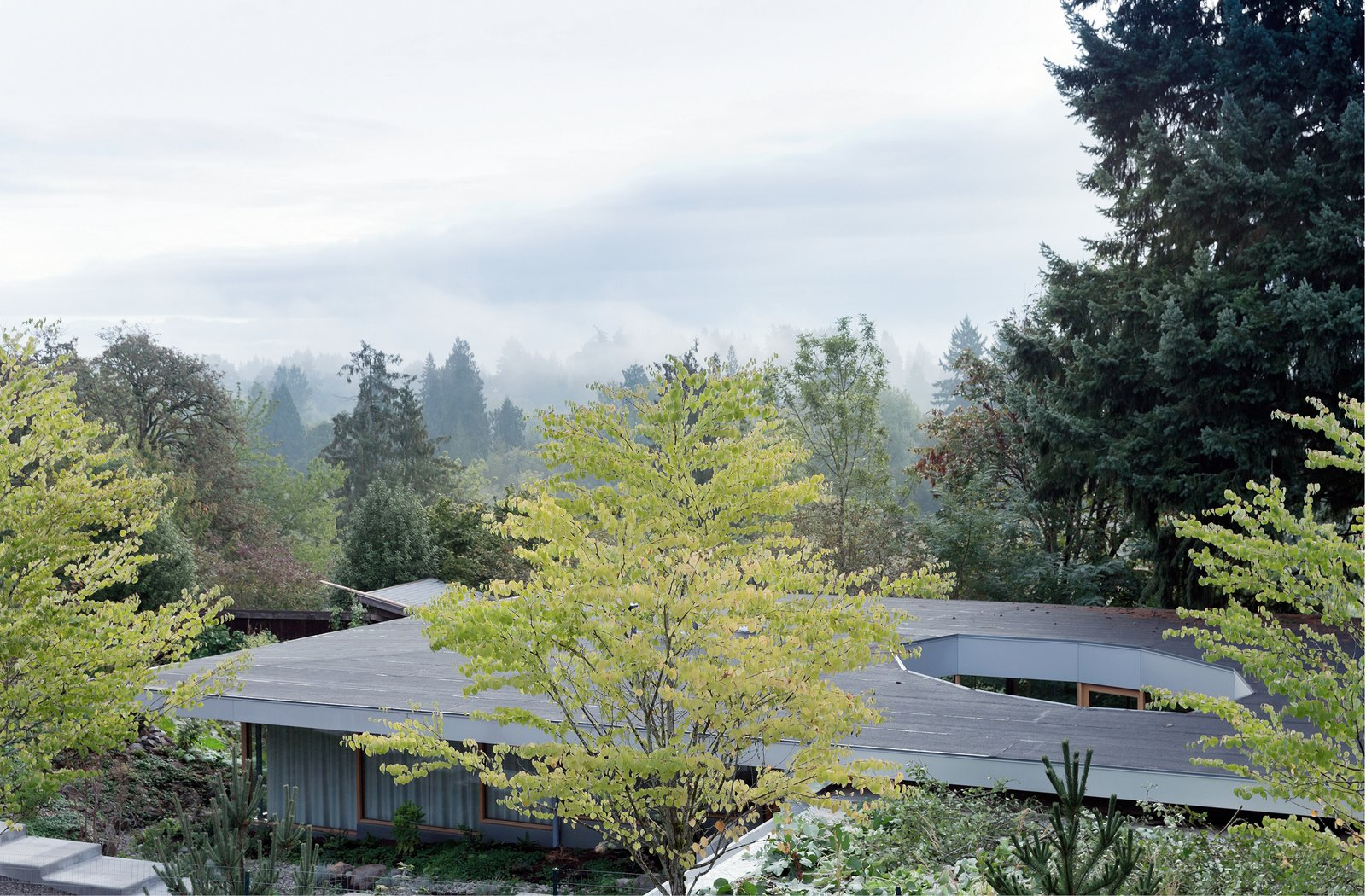 Piercing the center of this single volume, is a faceted exterior glass courtyard.  The Courtyard House by NO ARCHITECTURE