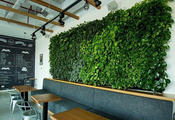 Green Wall Accent - Biophilic Design Photo  of Restaurant Renovation modern home