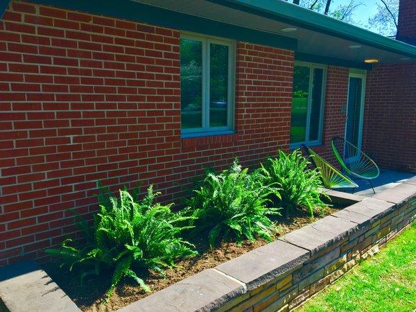 Front yard ferns Photo 5 of Gayfields modern home