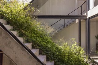 A Gardener's Home in Argentina Boasts Flowing Green Spaces - Photo 4 of 13 -
